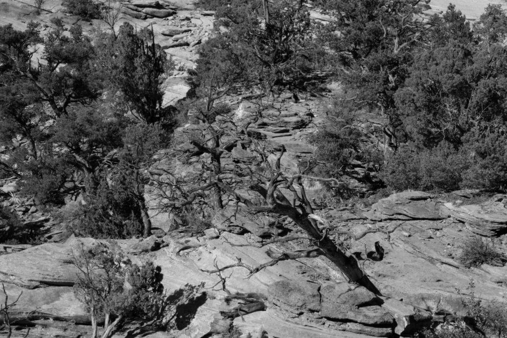 BW, USA, Uath, Zion Nationalpark