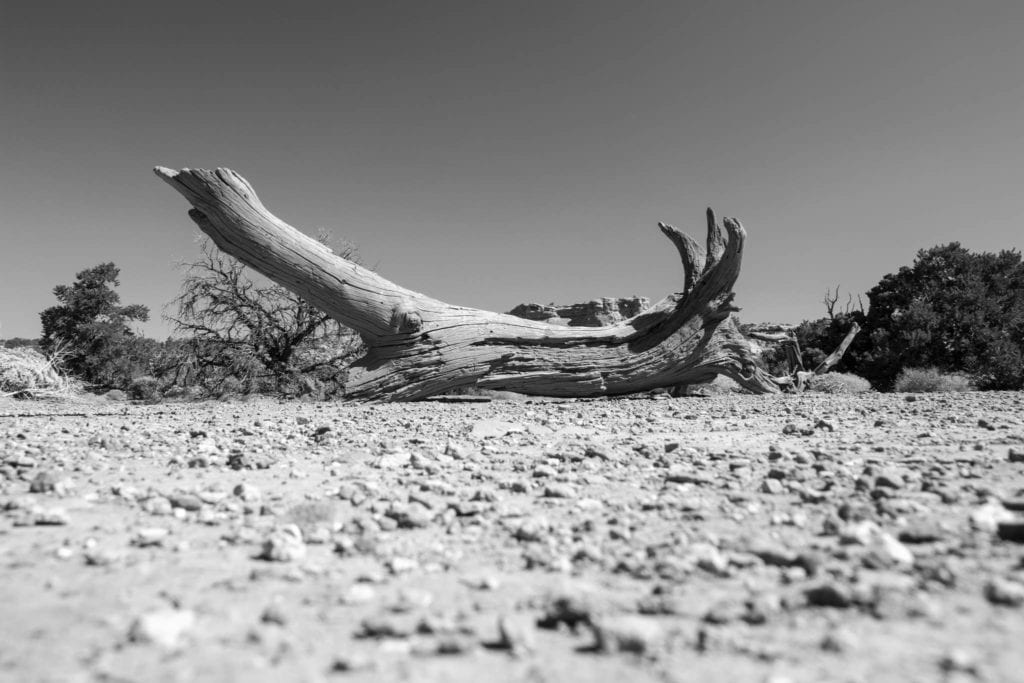 BW, Canyonlands Nationalpark, USA, Utah